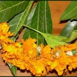Chaitra Masam 2017 Dates